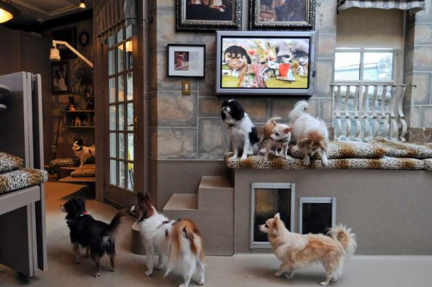 K9 interior design 10 tips to pet friendly decor iag - How to decorate dog room ...