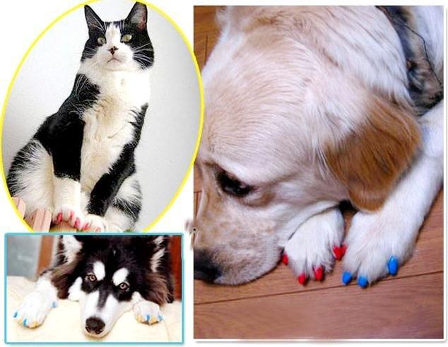 k9 interior design 10 tips to pet friendly decor   iag