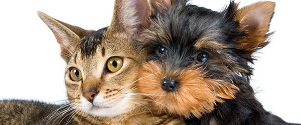 Pets & Assistance Animal Info